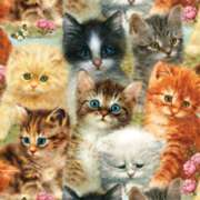 Jigsaw Puzzles - A Pile of Kittens