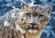 Snow Leopard - 1500pc Jigsaw Puzzle by Castorland