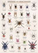 Spiders & Arachnids - 1000pc Jigsaw Puzzle by Eurographics