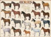 Eurographics Jigsaw Puzzles - Horses