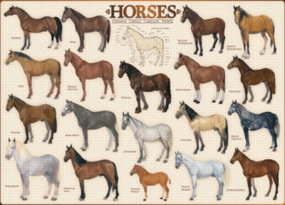 Horses - 1000pc Jigsaw Puzzle by Eurographics