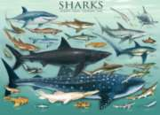 Sharks - 1000pc Jigsaw Puzzle by Eurographics