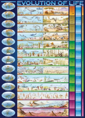 Evolution of Life - 1000pc Jigsaw Puzzle For Kids by Eurographics