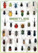 Beetles - 1000pc Jigsaw Puzzle by Eurographics