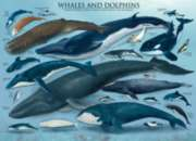 Whales & Dolphins - 1000pc Jigsaw Puzzle by Eurographics
