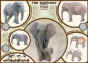 The Elephant - 1000pc Jigsaw Puzzle by Eurographics