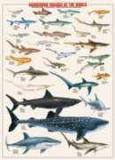 Dangerous Sharks of the World - 1000pc Jigsaw Puzzle by Eurographics