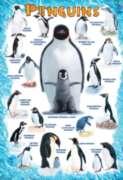 Eurographics Jigsaw Puzzles - Penguins