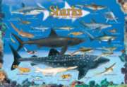 Sharks - 100pc Jigsaw Puzzle by Eurographics