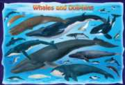 Whales & Dolphins - 100pc Jigsaw Puzzle by Eurographics