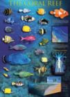 Coral Reef - 1000pc Jigsaw Puzzle by Eurographics