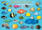 Tropical Fish - 1000pc Jigsaw Puzzle by Eurographics