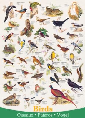 Eurographics Jigsaw Puzzles - Birds