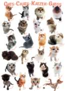 Cats - 1000pc Jigsaw Puzzle by Eurographics