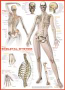 Skeletal System - 1000pc Jigsaw Puzzle by Eurographics
