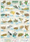 Snakes - 1000pc Jigsaw Puzzle by Eurographics