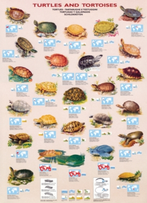 Turtles & Tortoises - 1000pc Jigsaw Puzzle by Eurographics