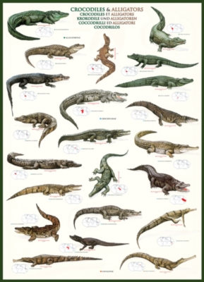 Eurographics Jigsaw Puzzles - Crocodiles and Alligators
