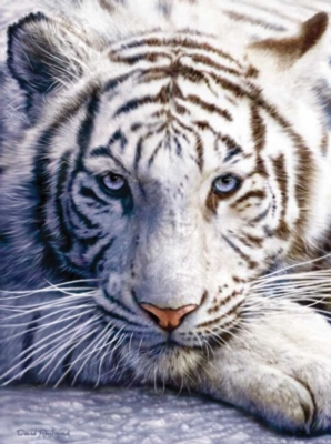 Jigsaw Puzzles - White Tiger Face